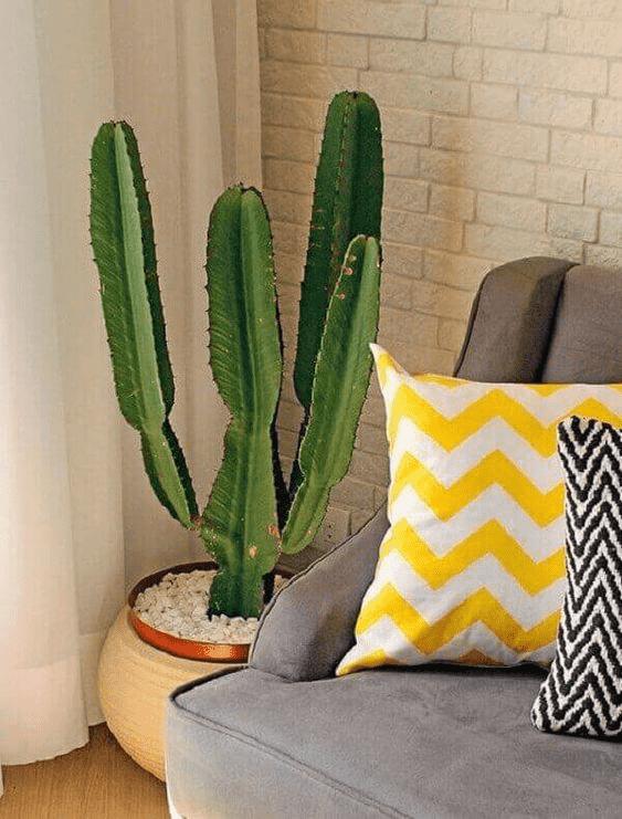 Plantas dentro de casa
