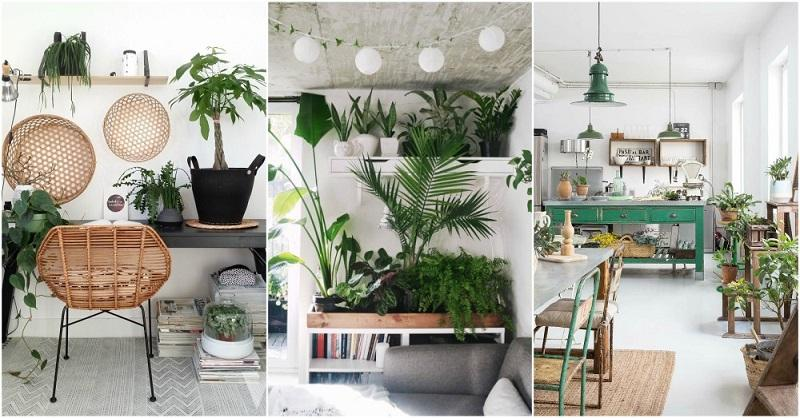 Imagem mostra decoração com plantas em casa