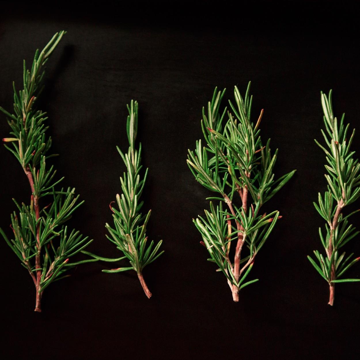 plantas medicinais antivirais 2