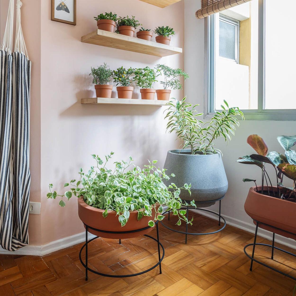 Avenca é opção de planta para quarto.