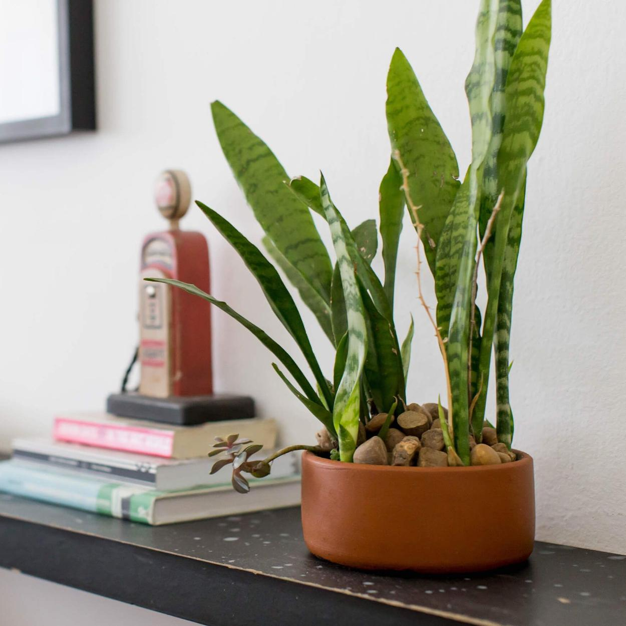 Plantas para quarto ideias