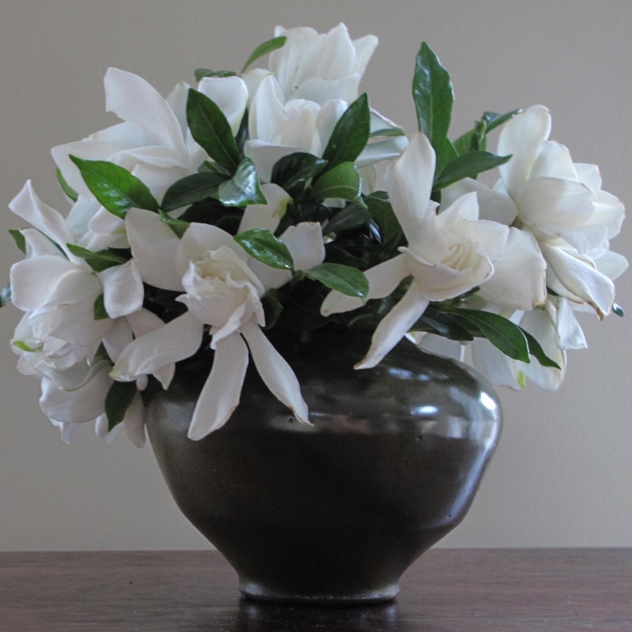 Gardênia é uma das plantas para quarto que decoram.