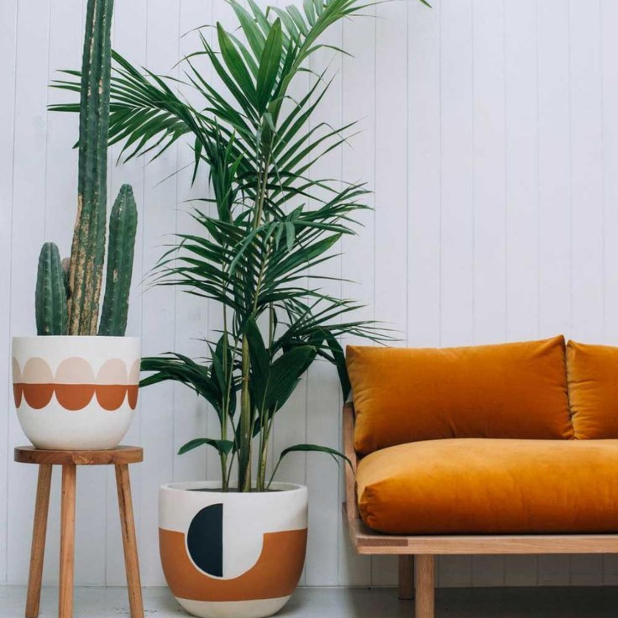 Palmeira Ráfia está nas lista de plantas para quarto.