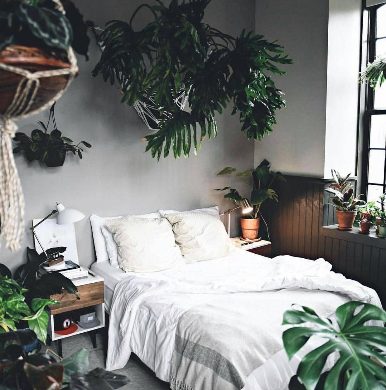 Quais são as plantas para quartos escuros.