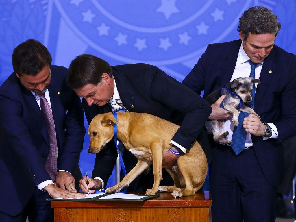 Bolsonaro sanciona lei que aumenta pena contra maus-tratos a cães e gatos