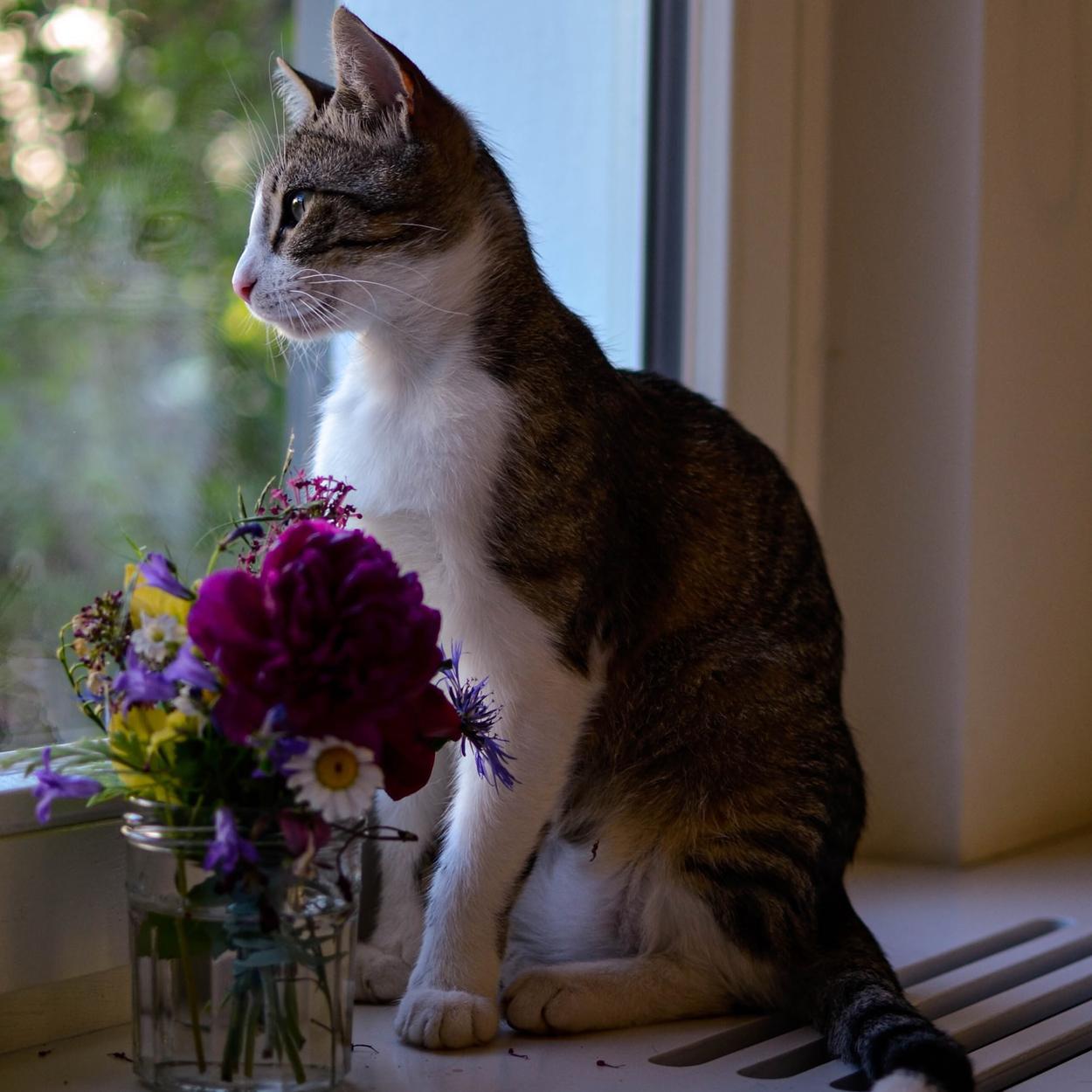 Flores venenosas para gatos