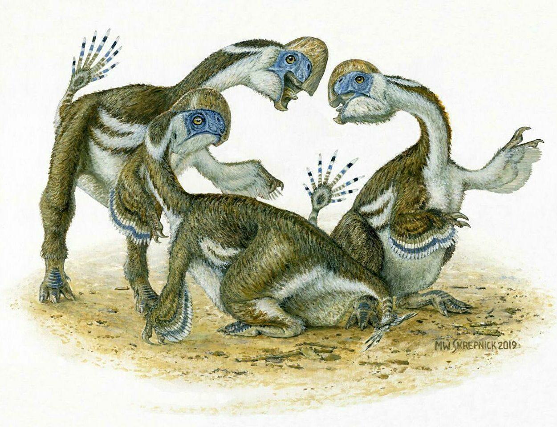 Dinossauro parecido com papagaio