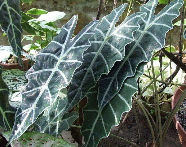 Folha de planta