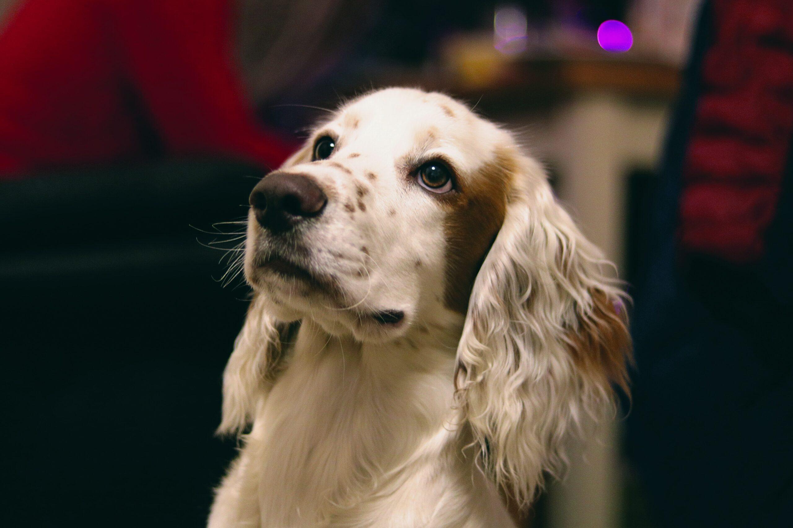 Cães e gatos se comunicam com seus donos