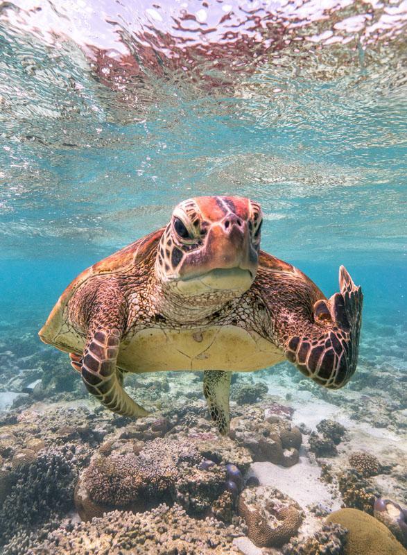 Foto de tartaruga mostrando gesto inusitado vence premiação