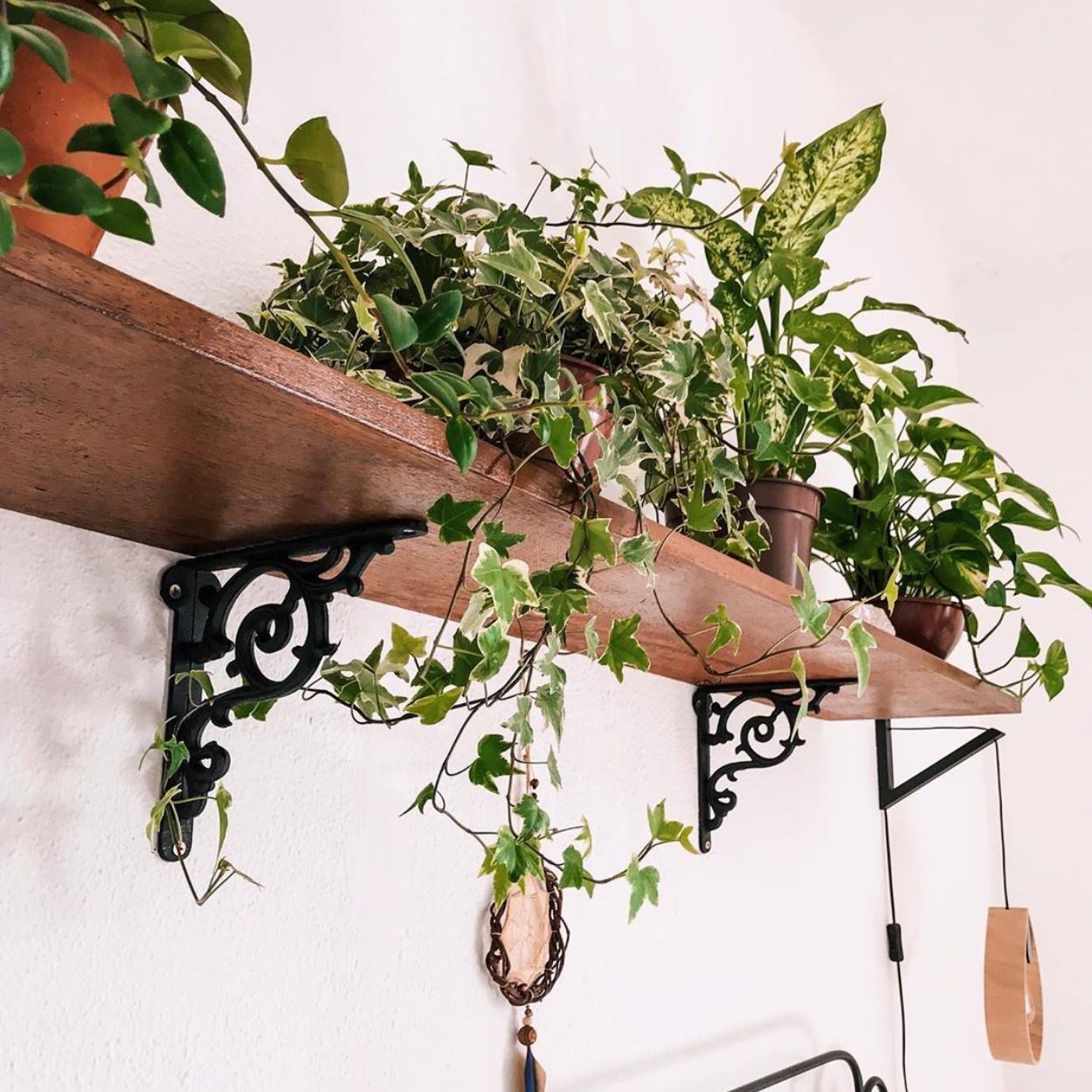 Planta jiboia em cima de uma prateleira