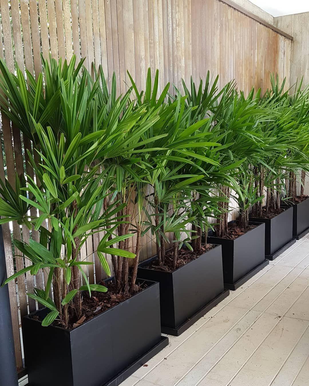 Plantas em apartamento - ráfia
