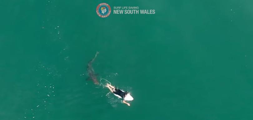 Tubarão ficou a poucos centímetros do surfista. Foto: Surf Life Saving/reprodução