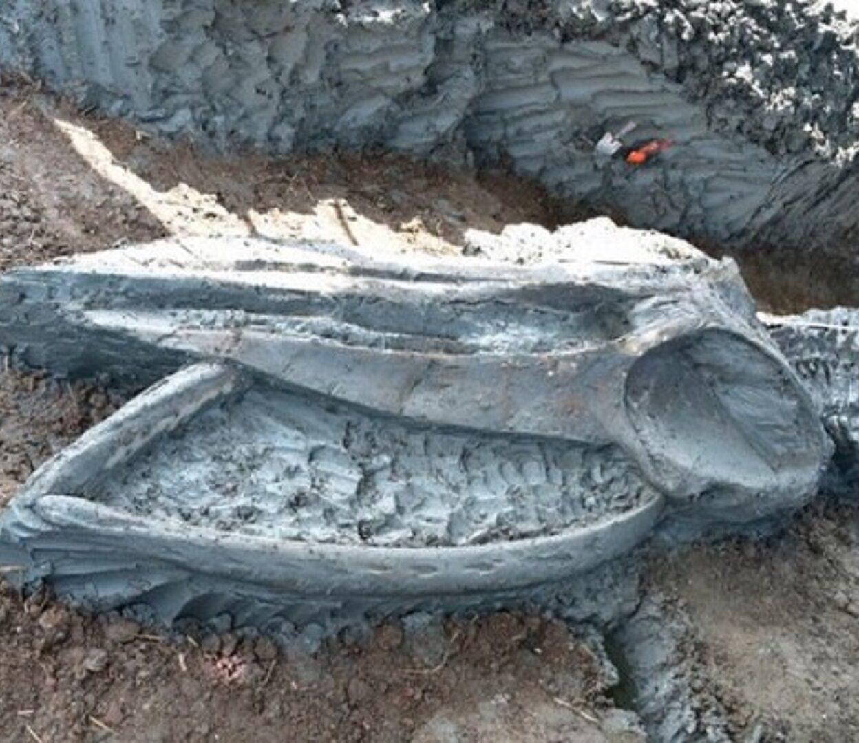 Esqueleto de baleia raro