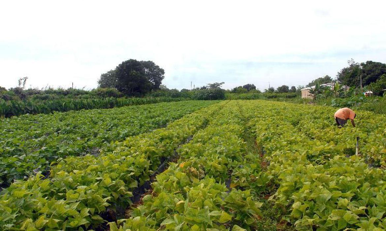crédito rural para investimentos no setor agropecuário