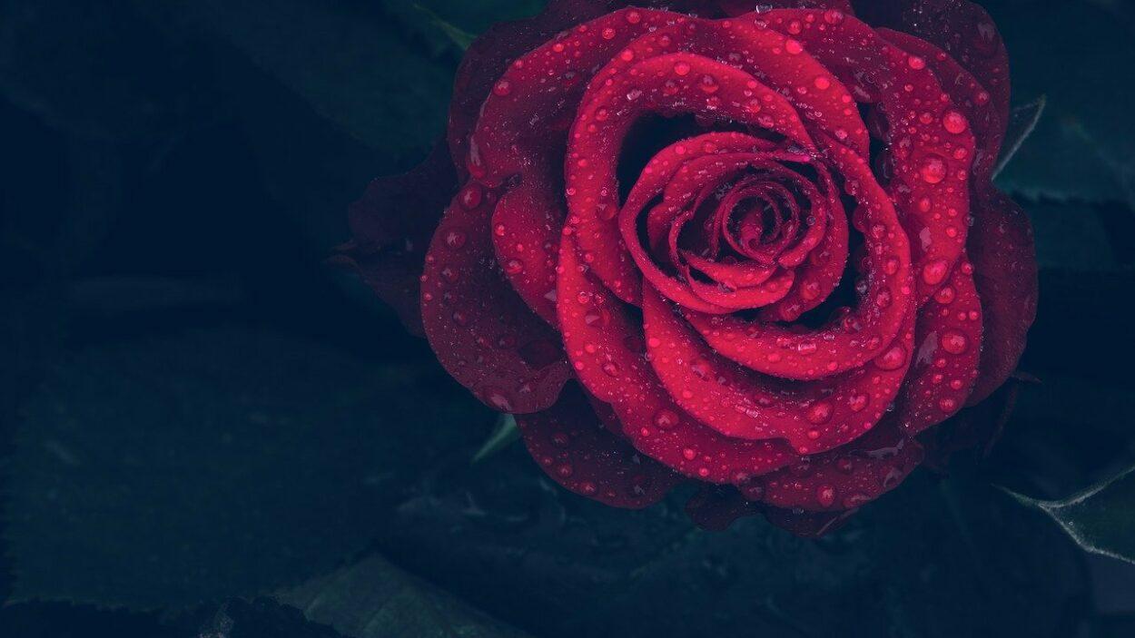 Banho de Rosas