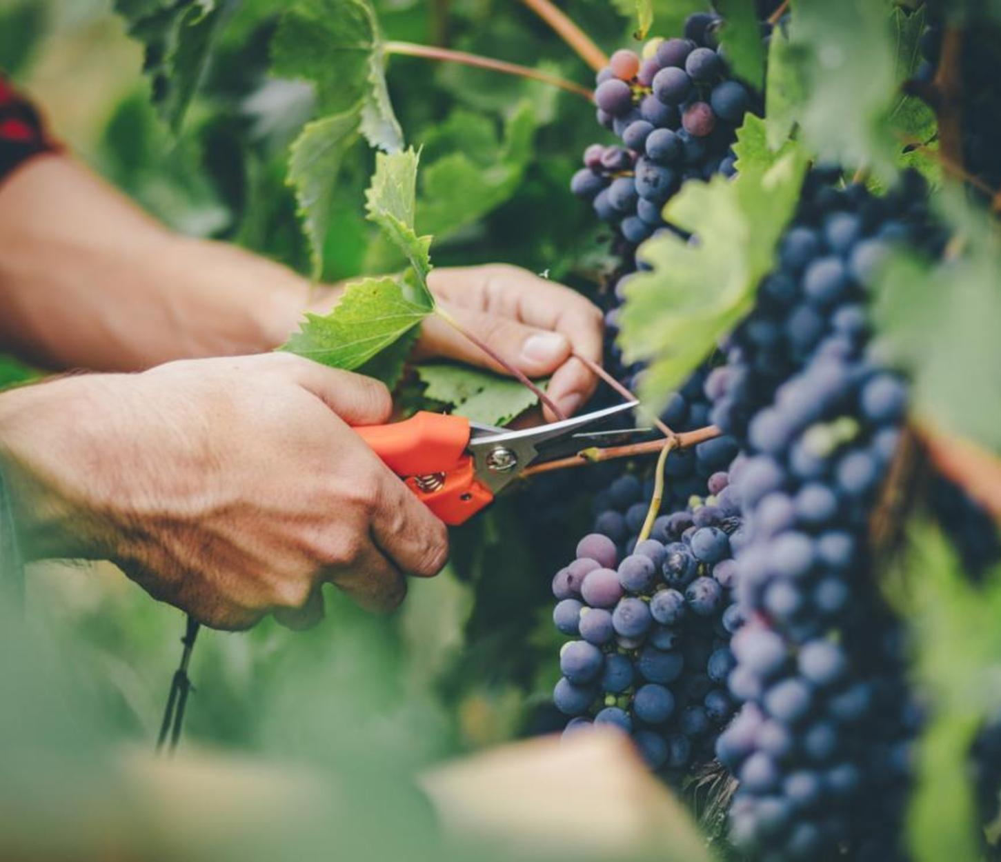 vantagens da fruta para a saúde