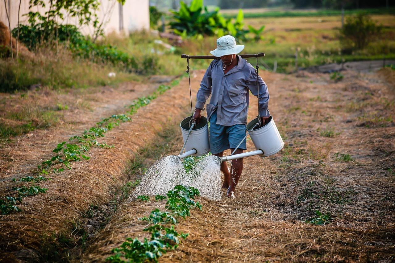 Foto mostra trabalhador rural regando plantação.